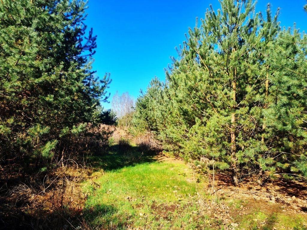 Działka rolna na sprzedaż Dębe, Dębe  4467m2 Foto 3