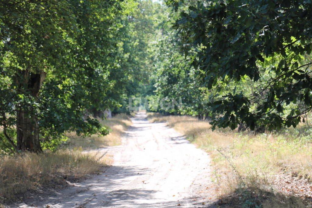 Działka rolna na sprzedaż Grzepnica, Grzepnica, Grzepnica  10800m2 Foto 2