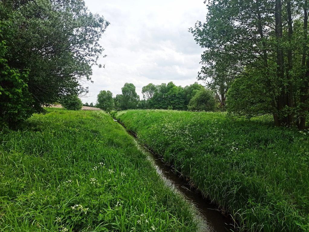 Działka rolna na sprzedaż Nowe Marzy  7800m2 Foto 1