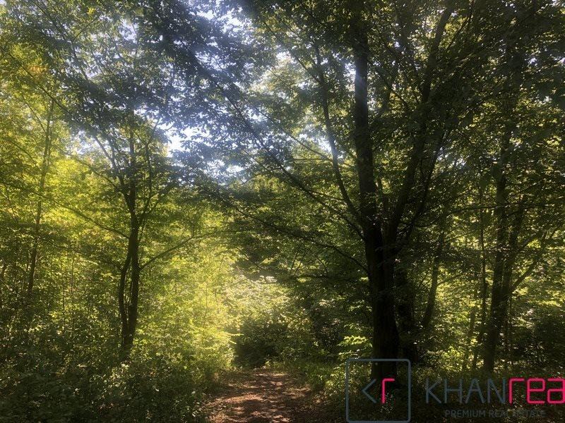 Działka leśna na sprzedaż Sobików  15000m2 Foto 3