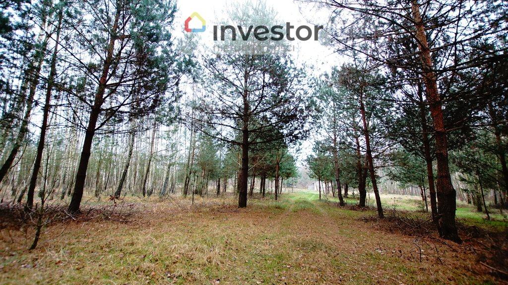 Działka leśna z prawem budowy na sprzedaż Bukowa Wielka  39157m2 Foto 1