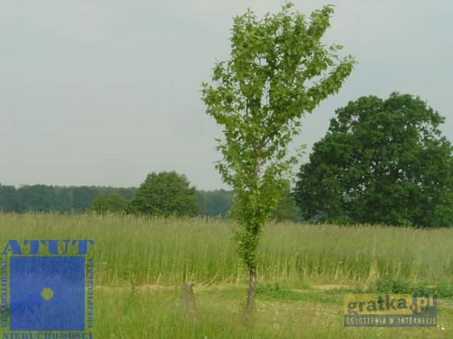 Działka rolna na sprzedaż Gliwice  15000m2 Foto 3