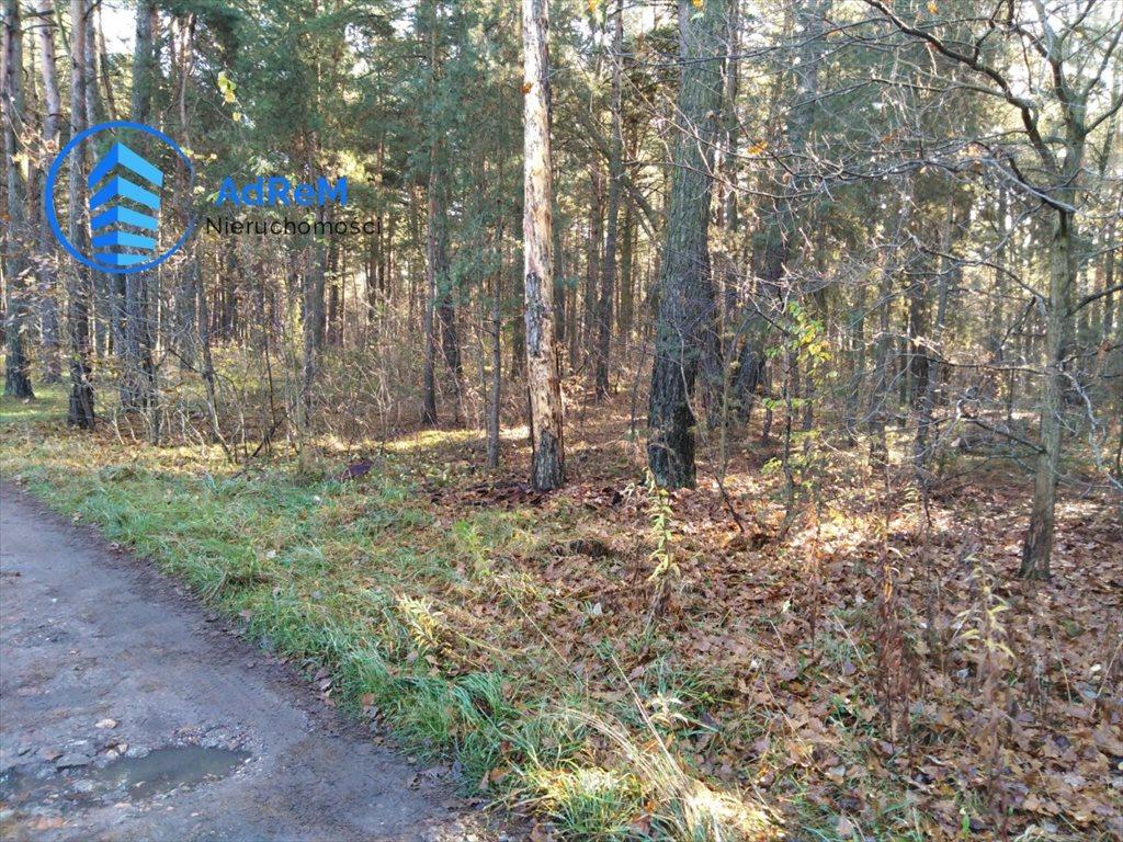 Działka leśna na sprzedaż Jeziórko, Świerkowa  1000m2 Foto 1