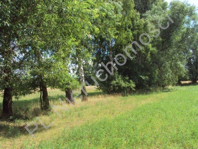 Działka rolna na sprzedaż Holendry Baranowskie  4000m2 Foto 7