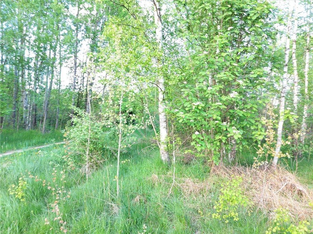 Działka rolna na sprzedaż Tymoteuszew  2000m2 Foto 4