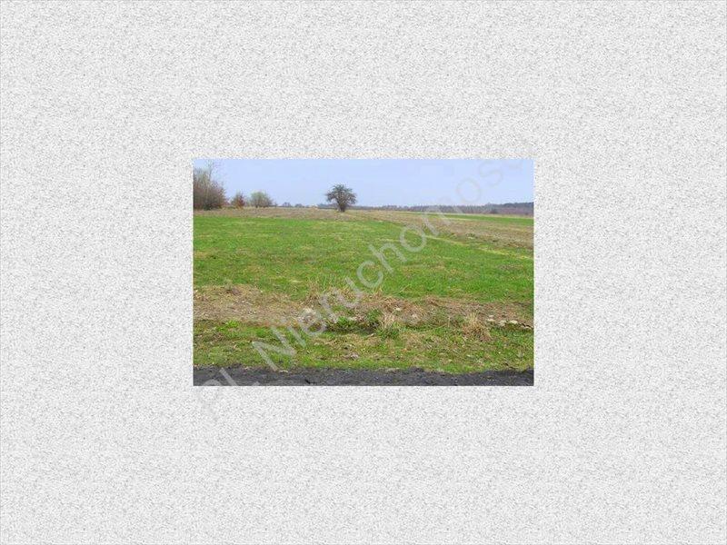 Działka rolna na sprzedaż Tyborów  4500m2 Foto 4