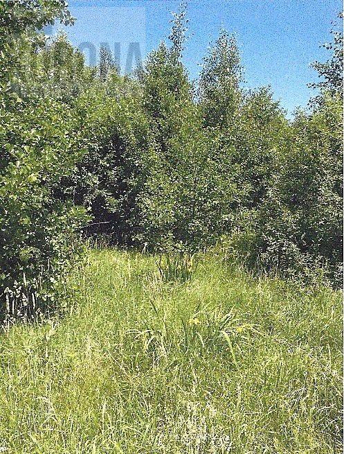 Działka leśna na sprzedaż Białystok, Dojlidy Górne  4322m2 Foto 2