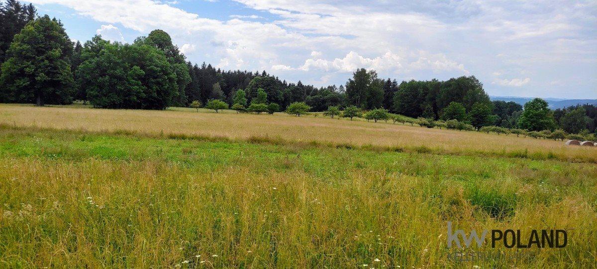 Działka rolna na sprzedaż Kudowa-Zdrój, Pstrążna  4386m2 Foto 7
