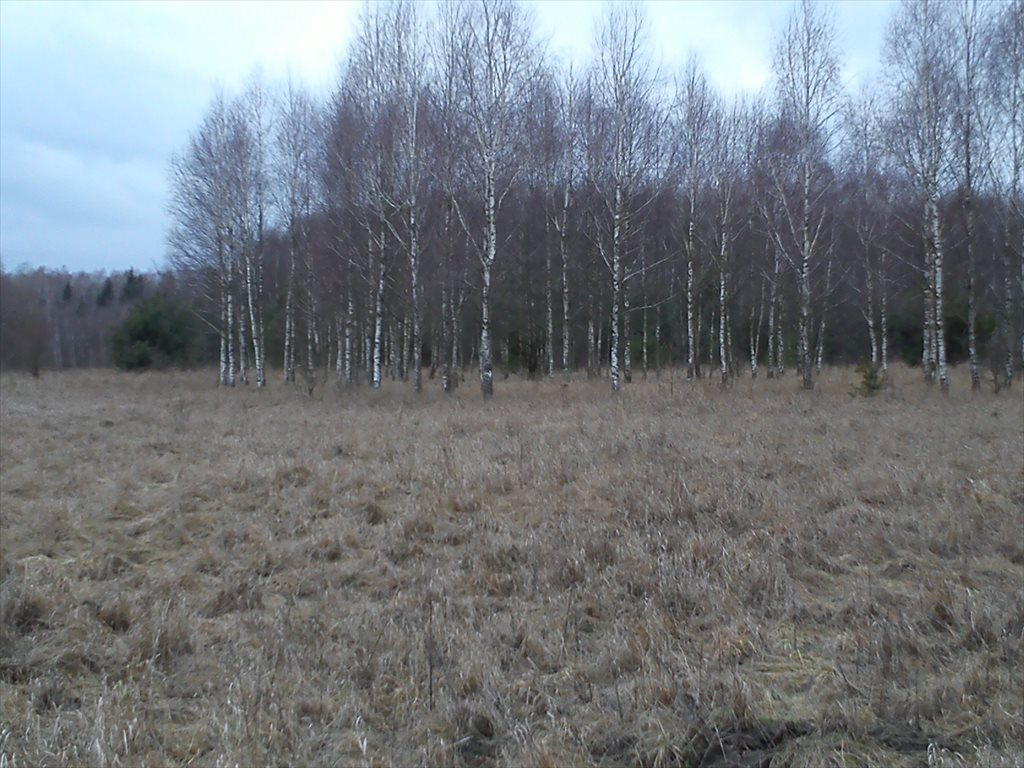Działka rolna na sprzedaż Starzyna  7600m2 Foto 1