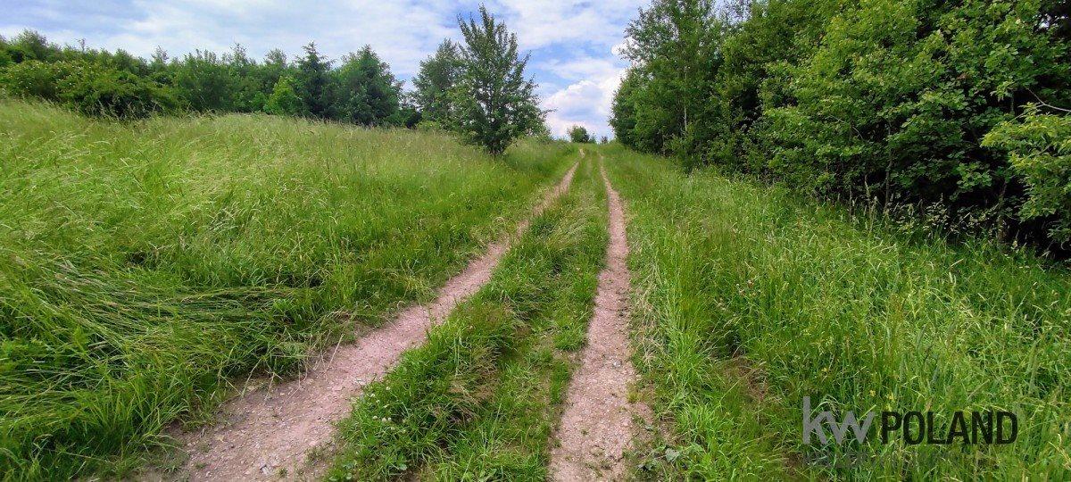 Działka rolna na sprzedaż Kudowa-Zdrój, Pstrążna  7250m2 Foto 4