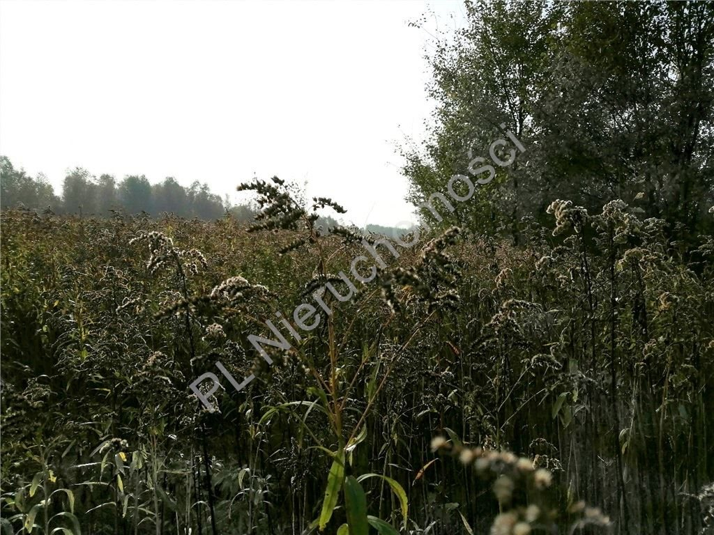 Działka rolna na sprzedaż Rakówiec  3894m2 Foto 1