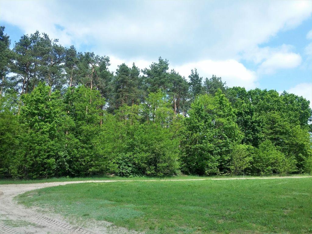 Działka leśna na sprzedaż Stary Kraszew  18100m2 Foto 7