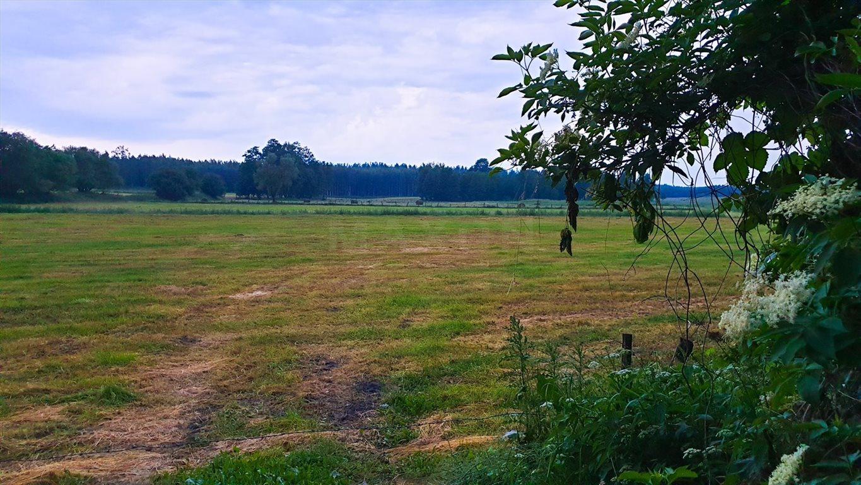 Działka siedliskowa na sprzedaż Grzegorze  14000m2 Foto 10