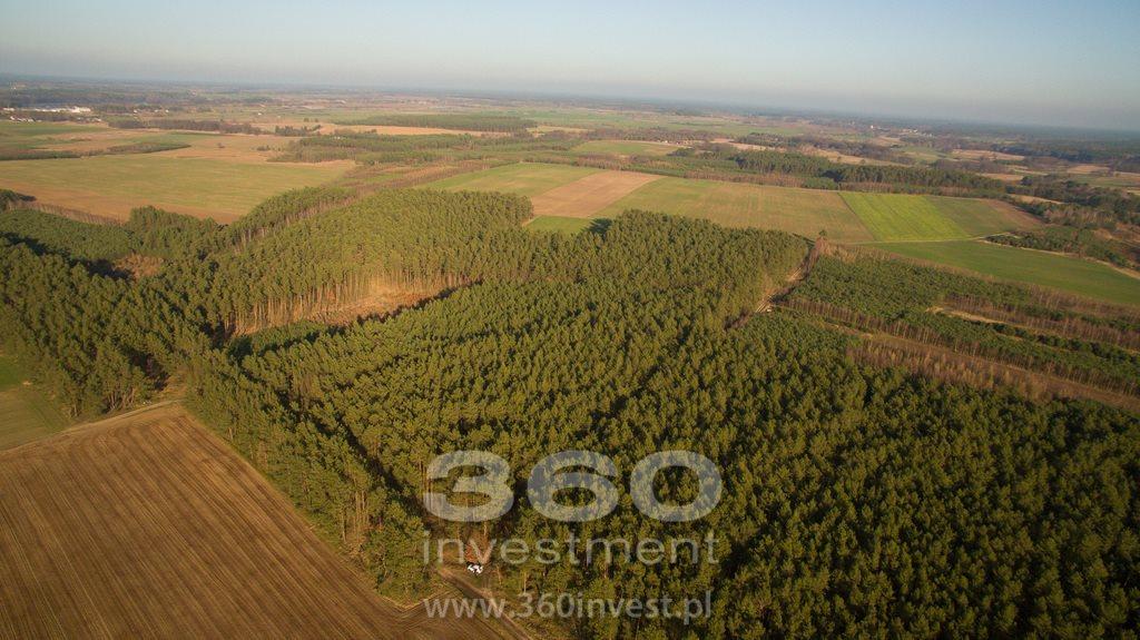 Działka leśna na sprzedaż Słonów  10800m2 Foto 8