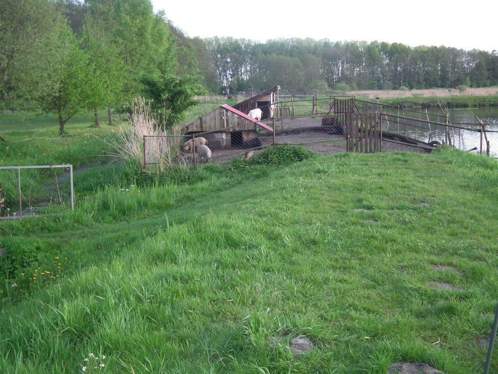 Działka budowlana na sprzedaż Cielętniki, Ogrodowa  1096m2 Foto 9