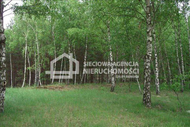 Działka leśna na sprzedaż Czarniż  44100m2 Foto 7
