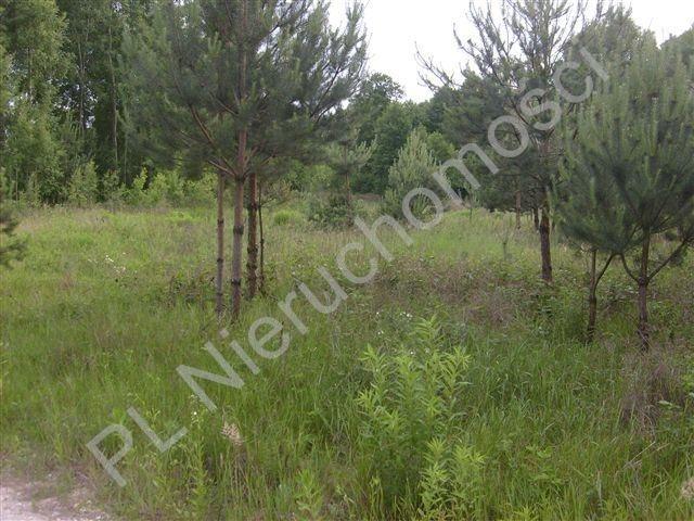 Działka rolna na sprzedaż Stare Budy  3052m2 Foto 1