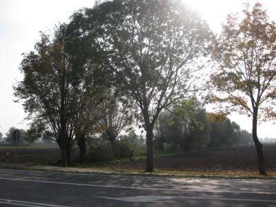 Działka inna na sprzedaż Kazimierzowo, Kazimierzowo  21734m2 Foto 3