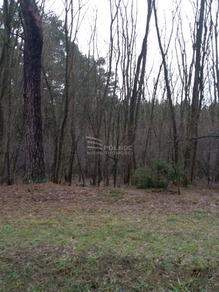 Działka leśna na sprzedaż Kuźnica  2900m2 Foto 4