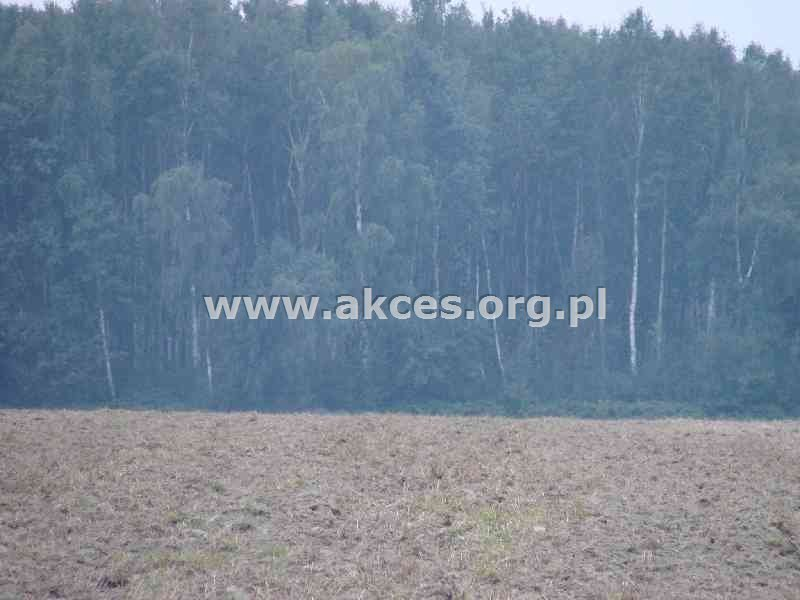 Działka budowlana na sprzedaż Wola Mrokowska  10000m2 Foto 5