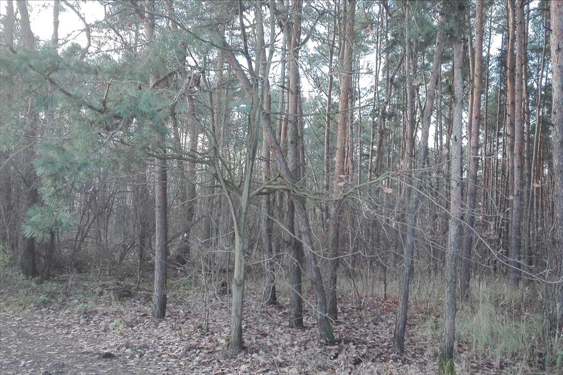 Działka leśna z prawem budowy na sprzedaż Piaseczno  2000m2 Foto 6