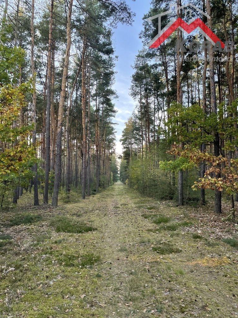 Działka leśna na sprzedaż Sowia Wola  3125m2 Foto 4