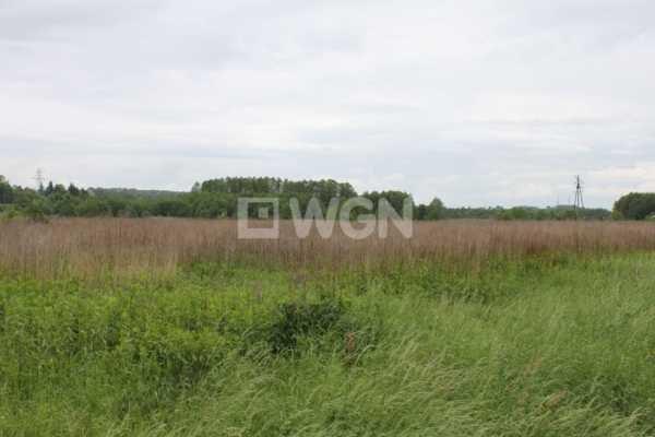 Działka inwestycyjna na sprzedaż Głuchów, Głuchów, Głuchów  7400m2 Foto 2