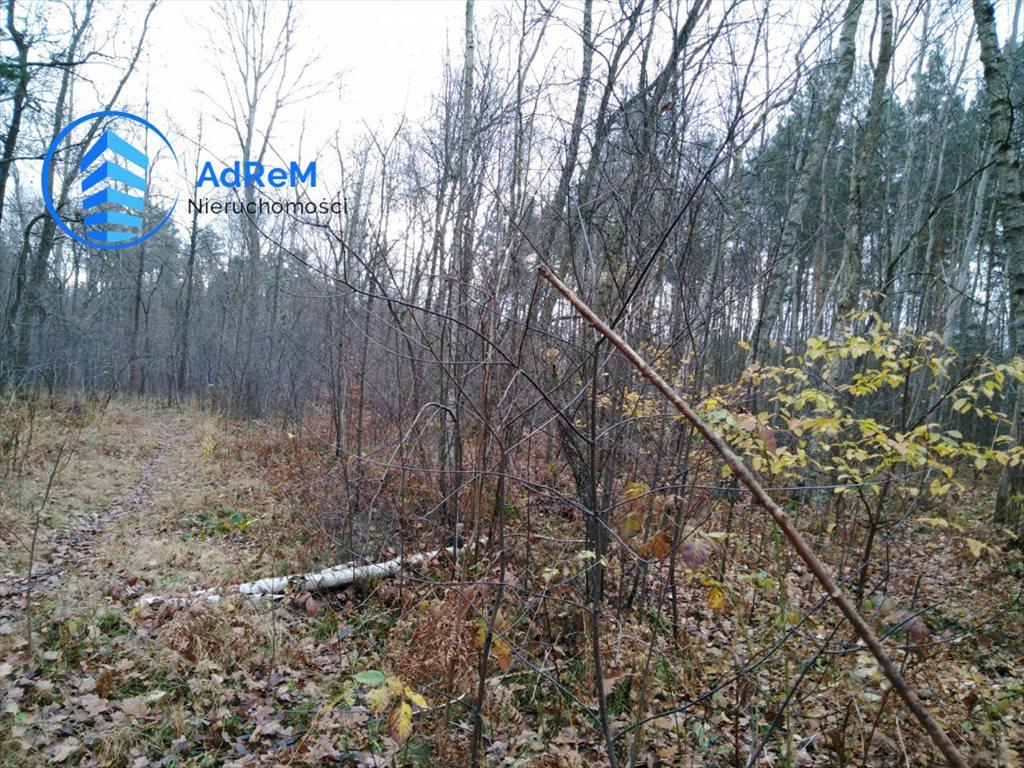 Działka leśna na sprzedaż Nowy Prażmów, Leśna  1521m2 Foto 8
