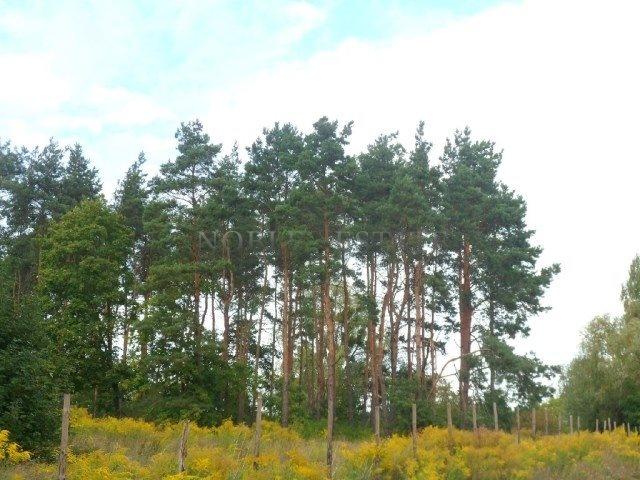 Działka budowlana na sprzedaż Poznań, Naramowice, Naramowice, Cytrynowa  859m2 Foto 3