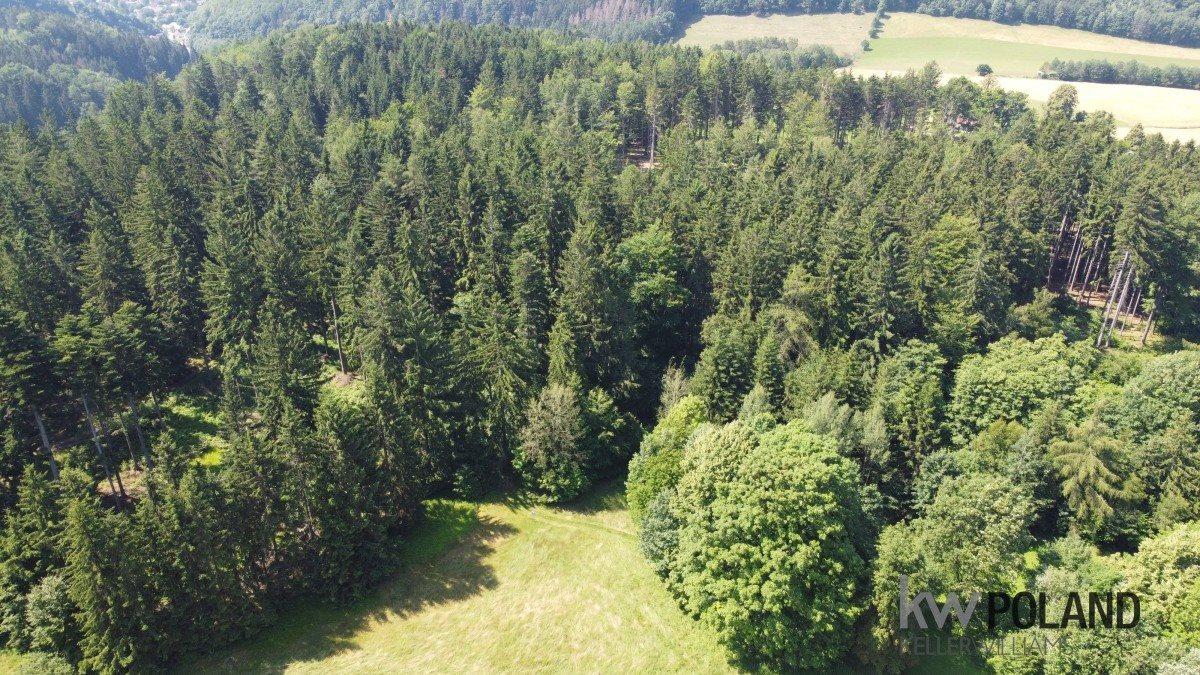 Działka rolna na sprzedaż Kudowa-Zdrój, Pstrążna  4386m2 Foto 5