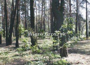 Działka budowlana na sprzedaż Józefów, Jarosław  3748m2 Foto 3