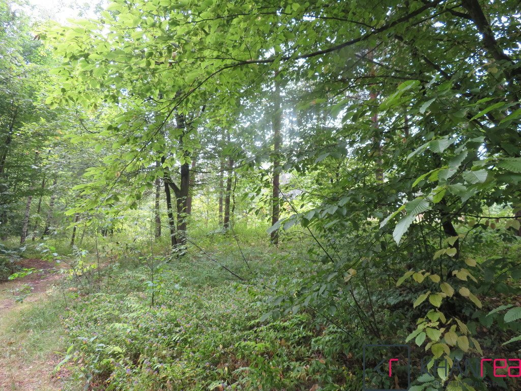 Działka leśna na sprzedaż Sobików  1200m2 Foto 1
