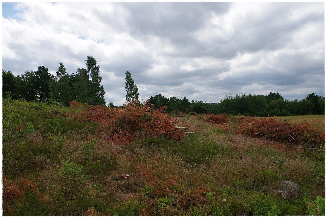 Działka rolna na sprzedaż Linia, Dębowa  12607m2 Foto 3