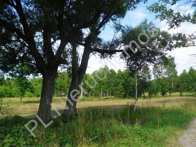 Działka rolna na sprzedaż Sokóle  5511m2 Foto 2