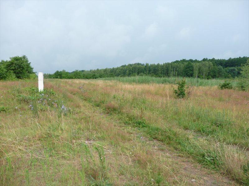 Działka rolna na sprzedaż Zielona Góra, Ochla  36500m2 Foto 3