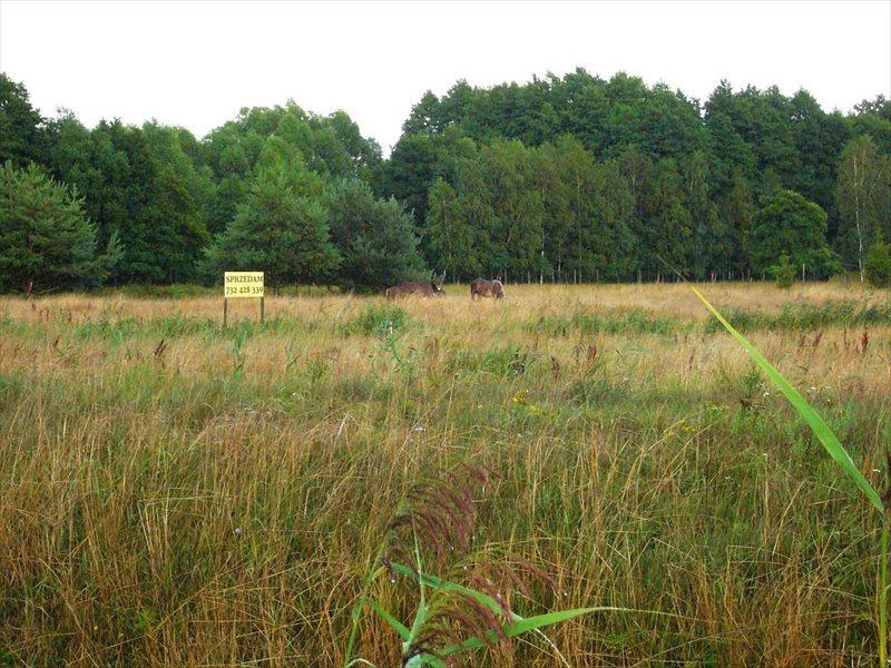 Działka rolna na sprzedaż Smołdziński Las  1500m2 Foto 1