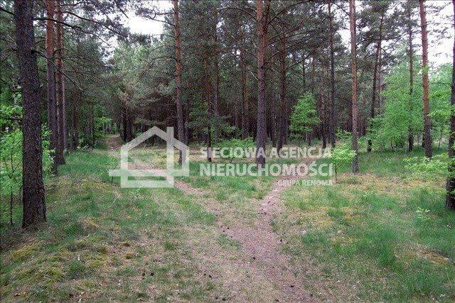 Działka leśna na sprzedaż Czarniż  44100m2 Foto 9