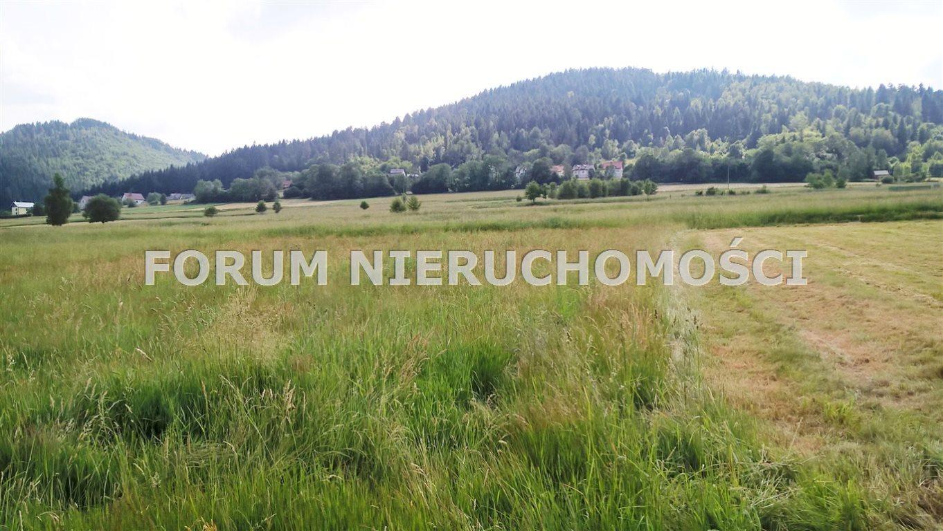 Działka rolna na sprzedaż Słotwina  1000m2 Foto 2