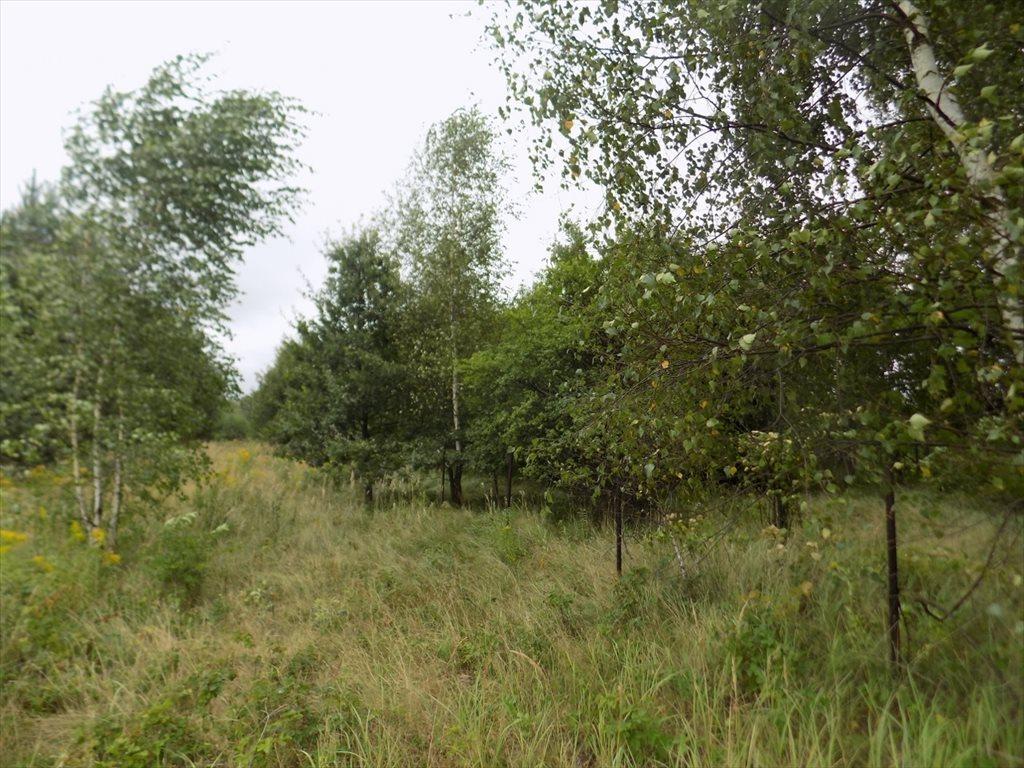 Działka rolna na sprzedaż Katowice, Podlesie  1581m2 Foto 7