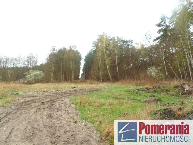 Działka siedliskowa na sprzedaż Kołczewo  9357m2 Foto 4