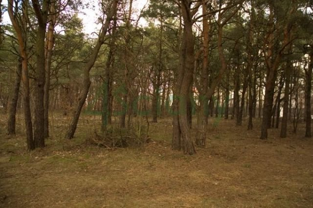 Działka leśna na sprzedaż Warszawa, Wawer, Falenica  1019m2 Foto 1