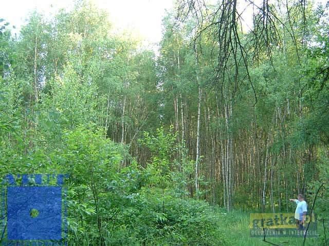 Działka leśna na sprzedaż Gliwice, Ok.rudy  10000m2 Foto 3