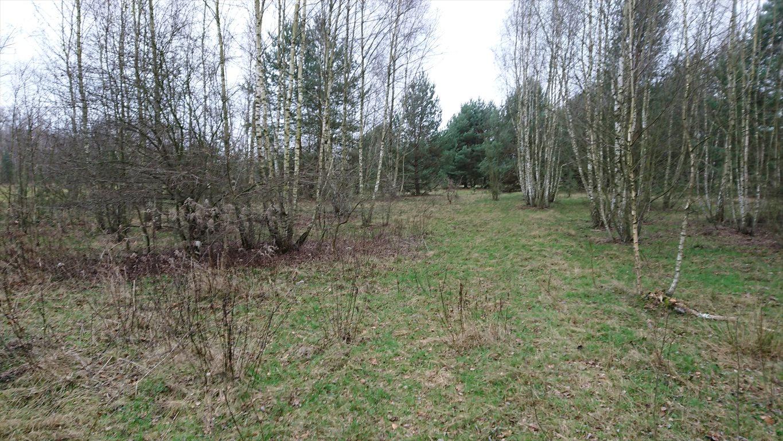 Działka rolna na sprzedaż Budy Michałowskie  12012m2 Foto 3