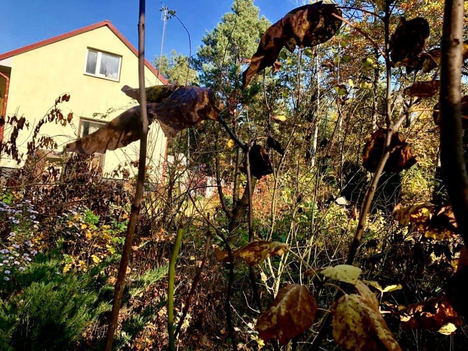 Dom na sprzedaż Magnuszew, Wola Magnuszewska - Tyborów  120m2 Foto 1