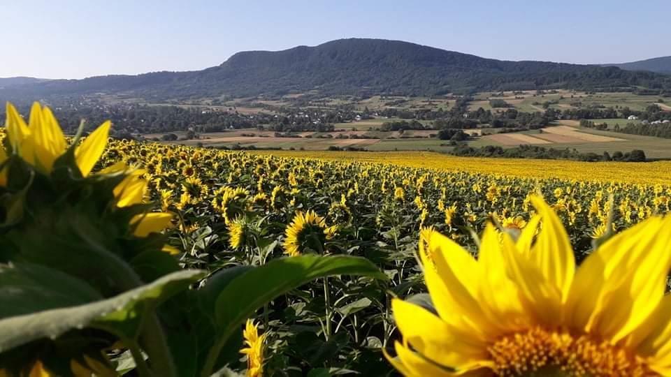 Działka rolna na sprzedaż Jasionka  2800m2 Foto 1