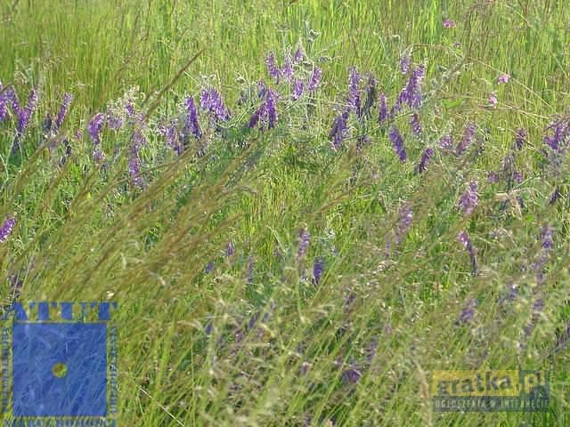 Działka rolna na sprzedaż Gliwice  15000m2 Foto 4
