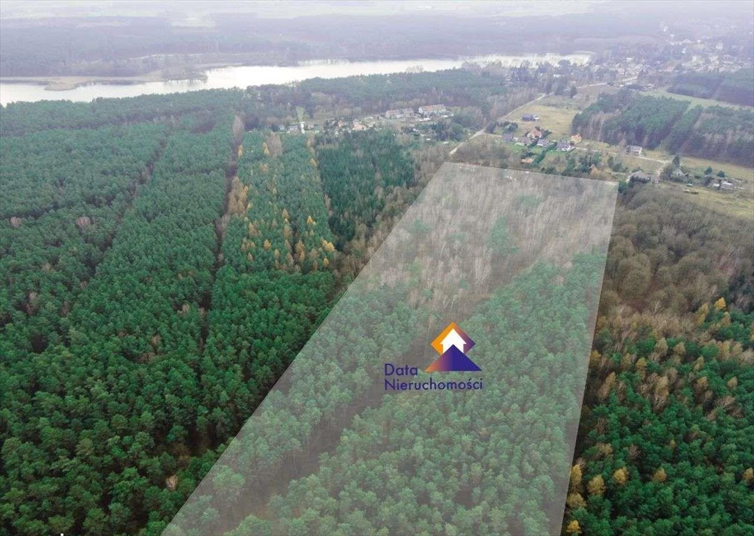 Działka leśna na sprzedaż Stęszewko  73452m2 Foto 1