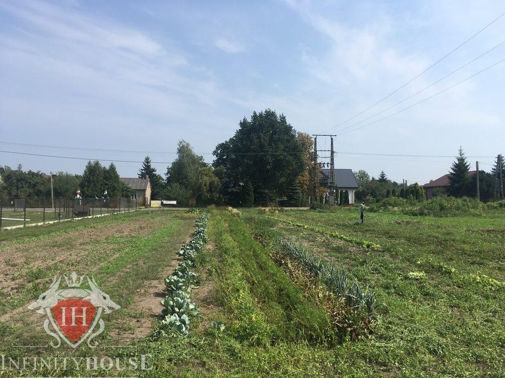 Działka rolna na sprzedaż Wólka Grodziska  4914m2 Foto 4