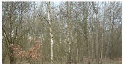 Działka leśna na sprzedaż Myszków, Będusz, Żelisławickiej  3125m2 Foto 2