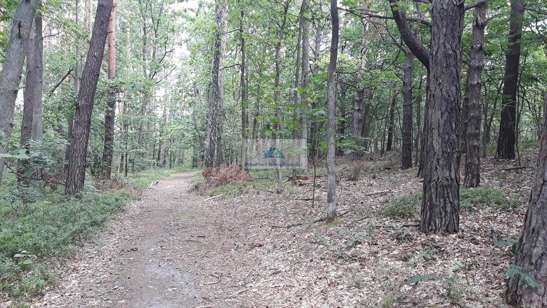 Działka leśna na sprzedaż Warszawa, Wawer, Międzylesie, Torfowa  3456m2 Foto 1
